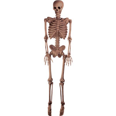 Hanging Skeleton - 1.5m Halloween Prop